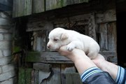 Подарю щенков,  в добрые руки!!!!!!!!