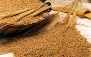 Закупаем зерно фуражное,  гречиху по высоким ценам,  дорого