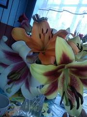 Продам лилии разных расцветок от 15000